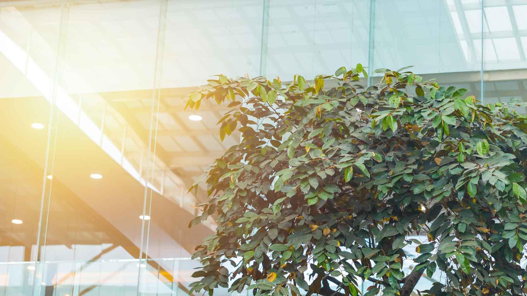 Nachhaltigkeit bei der Dwuzet Fassadentechnik